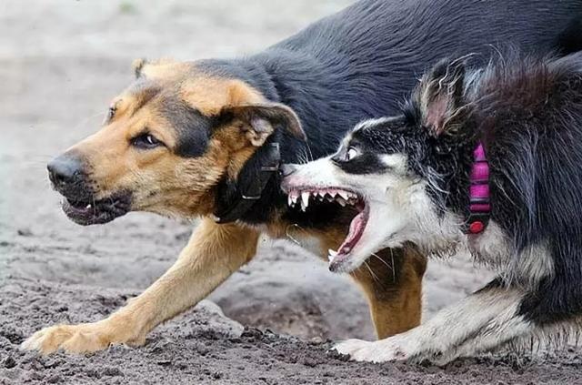 Не бесите меня! Откуда на улицах Днепра столько бродячих собак?