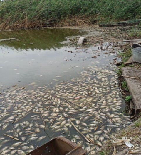В Днепре ЧП районного масштаба вскоре станет городским: вода из отравленного канализацией озера пойдет в Самару