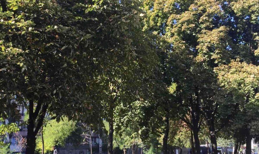 О парках Днепра и выделяемых на них миллионах гривен