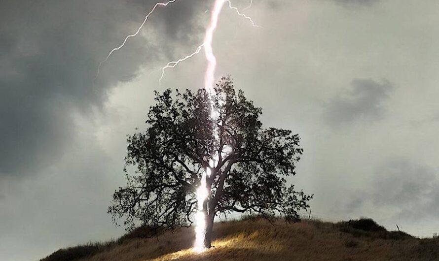 Прятаться от грозы под орехом? Что нужно знать о молнии, чтобы остаться в живых?