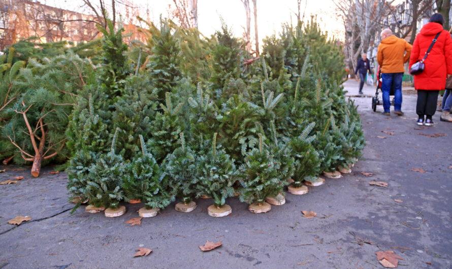 Где в Днепре купить «правильные» новогодние елки? На этот вопрос отвечает мэрия