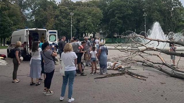 «Неустойчивое» дерево в центре Днепра сломало пенсионеру ноги